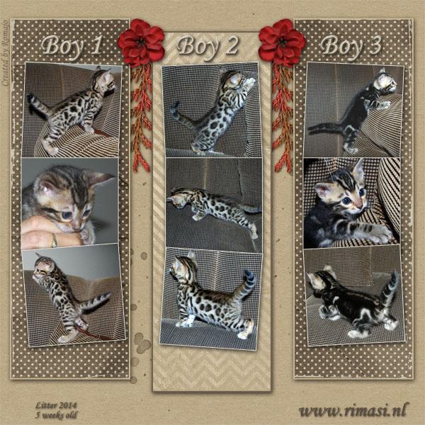 Kittens 2014 - 5 weken oud
